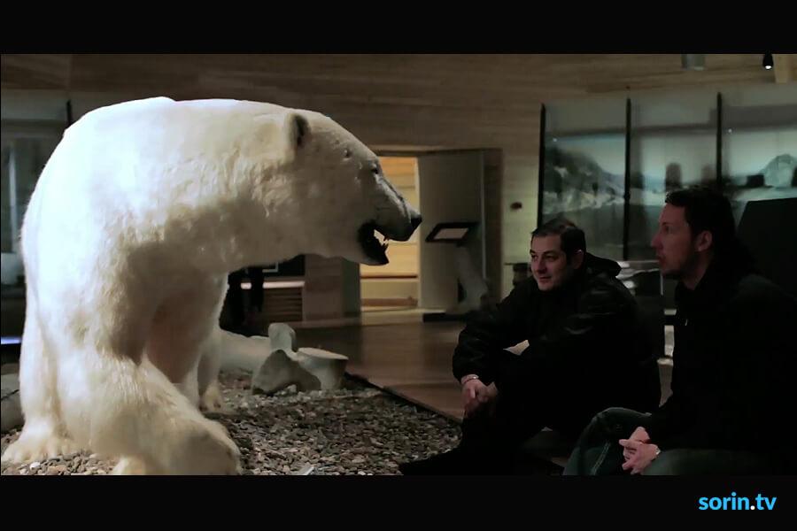 Svalbard Polar Bear Tours