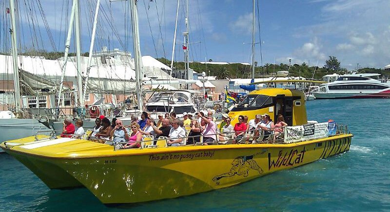 wildcat boat tour bermuda
